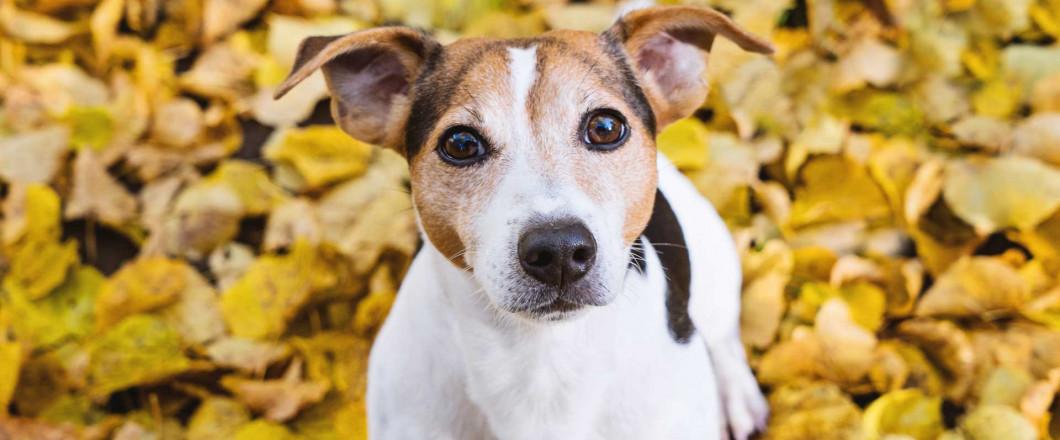 dog, whitesboro ny